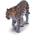 ANNABELL - Leopard - Animals