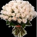 Danijela ♥´´¯`•.¸¸.Ƹ̴Ӂ̴Ʒ - Flower - Plants