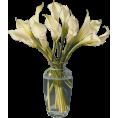 Lady Di ♕  - Flowers - Plants