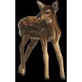 Lady Di ♕  - Roe deer - Animals