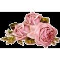 Marisol Espaillat - Roses - Plants