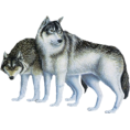 Monika  - Wolf - Animals