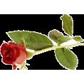 Nani - Ruža - Plants