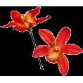 NeLLe - Flower - Plants