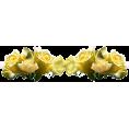 Pepeljugica - Ruže - Plants
