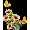 Pepeljugica - Suncokreti - Plants