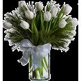 Pepeljugica - Tulipani - Plants