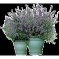 svijetlana - Biljke - Plants