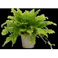 sanja blažević - Biljke - Plants