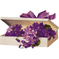 Tamara Z - Cvijet Plants Purple - Plants