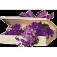 Tamara Z - Cvijet Plants Purple - Plants