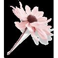 Tamara Z - Cvijet Plants Pink - Plants