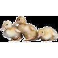 Doña Marisela Hartikainen - duck  - Animals