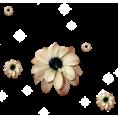 sanja blažević - Flower Plants Beige - Pflanzen