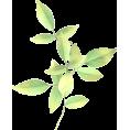 sanja blažević - Flower Plants Green - Plants