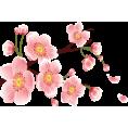 sanja blažević - Flower Plants Pink - Plants