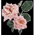 sanja blažević - Flower Plants Pink - Piante
