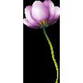 sanja blažević - Flowers - Rośliny