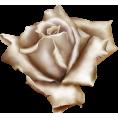 sanja blažević - Flowers - Biljke