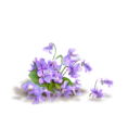 sanja blažević - Flower Purple Plants - Plants