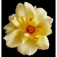 sandra24 - Flower Yellow Plants - Plants