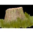 sandra24 - Tree - Plants