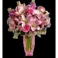 sandra24 - Roses - Plants