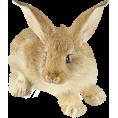 sandra24 - Graf.elementi - Animals