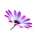 jessica - Flower - Plants