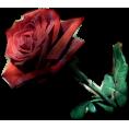 jessica - Rose - Plants