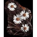 jessica - Flowers - Plants