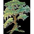jessica - Tree - Plants