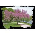 jessica - Tree - Nature