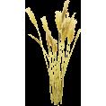 jessica - Grass - Plants