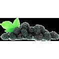 jessica - Kupine - Fruit