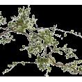 jessica - Leaf - Plants