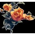 jessica - ruže - Plants