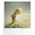Doña Marisela Hartikainen - Polaroid Pictures  - Предметы