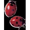 Doña Marisela Hartikainen - Ladybird - Animals