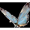Doña Marisela Hartikainen - Butterfly - Animals