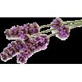 Doña Marisela Hartikainen - Flower - Plants
