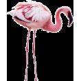 Doña Marisela Hartikainen - Flamingos - Animals