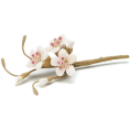 Doña Marisela Hartikainen - Flowers - Plants