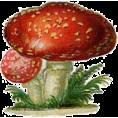 Doña Marisela Hartikainen - Mushroom - Plants