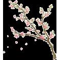 Doña Marisela Hartikainen - Tree - Plants