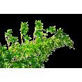 trendme.net - Plant - Plants