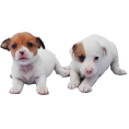 trendme.net - Dog - Animals
