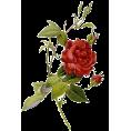 trendme.net - Rose - Plants