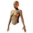 trendme.net - female semiprofile torso - Figure