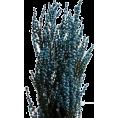 sandra24 - Plants - Plants